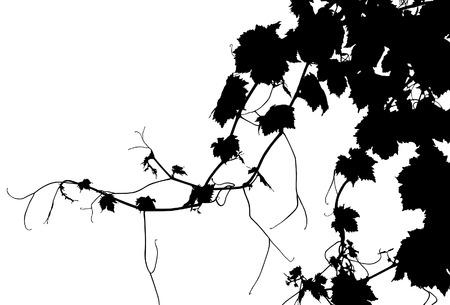 Grape Vine Vector Silhouette Ilustracja