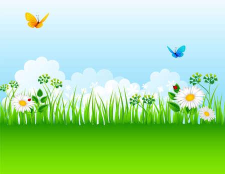 Vector illustration of Summer grass Stock Vector - 14865331