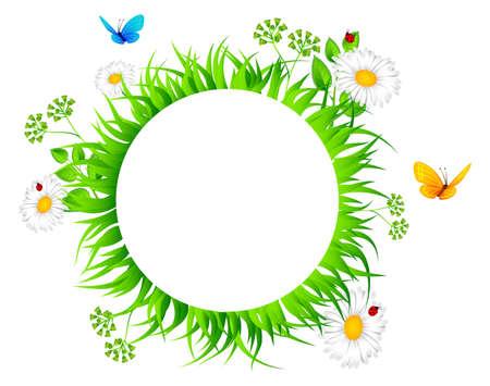 Vector illustration of Summer grass Stock Vector - 14865096