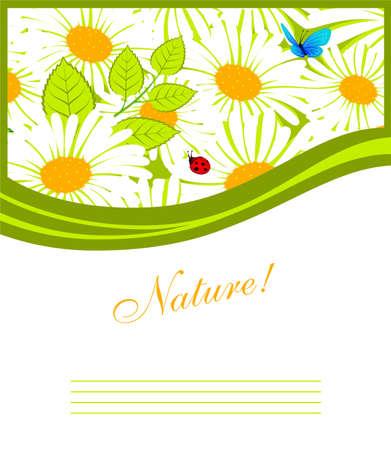 Vector illustration of Summer grass Vector