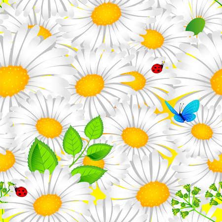 Vector illustration of Chamomile background Vector