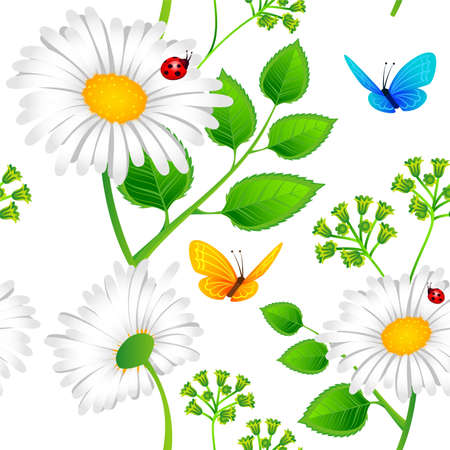 chamomile flower: Vector illustration of Chamomile seamless background