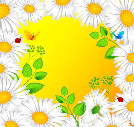 Vector illustration of Chamomile back Vector