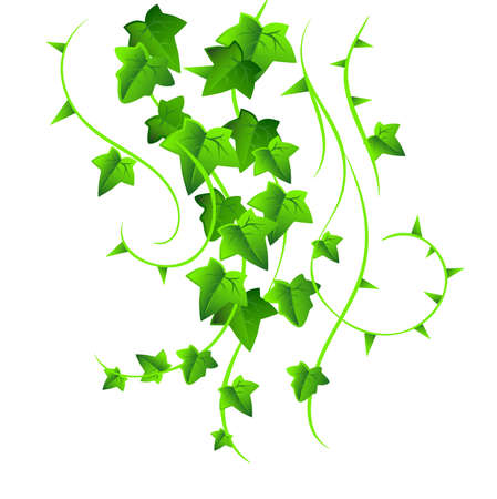 Green ivy Vector