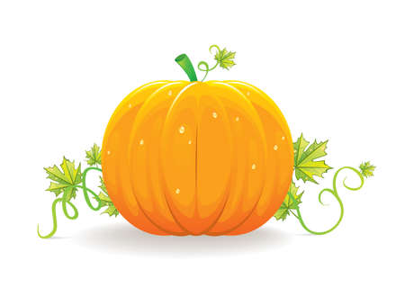 large pumpkin: Halloween pumpkin Illustration