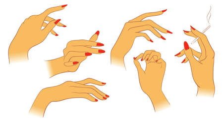 finger nails: Vector women hands Illustration