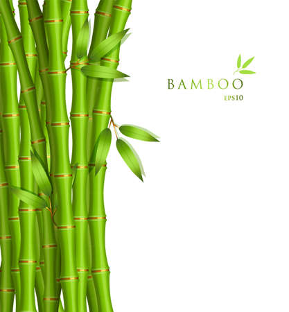 bamboo leaf: illustration of Background with green bamboo