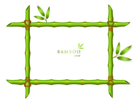 bamboo border: Vector illustration of Background with green bamboo frame