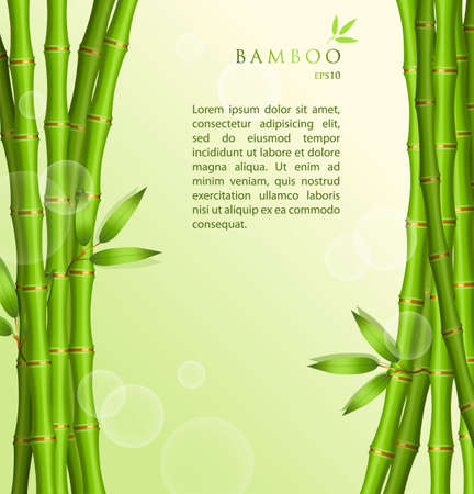 illustration of Background with green bamboo Vector