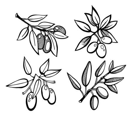 Vector illustration of Drawing Olives set Vector
