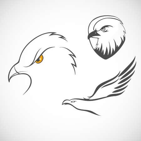 Vector illustration of Eagles set Illustration