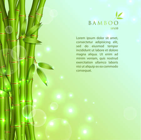 bamboo leaf: Vector illustration of Background with green bamboo