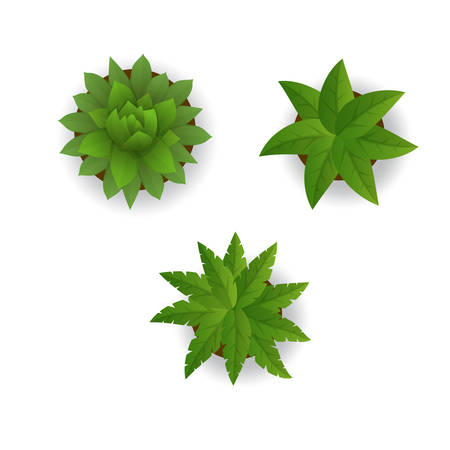Vector illustration of Houseplant set on a white background Vector