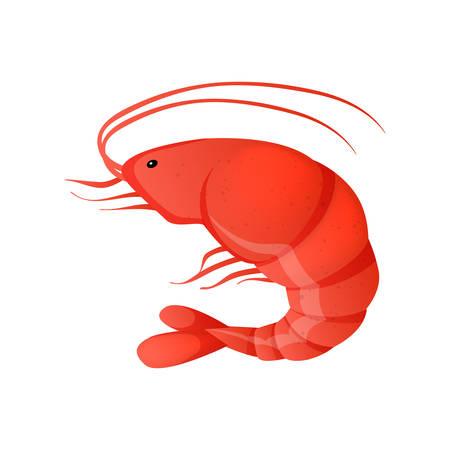 prawn: Vector illustration of red shrimp on white background Illustration