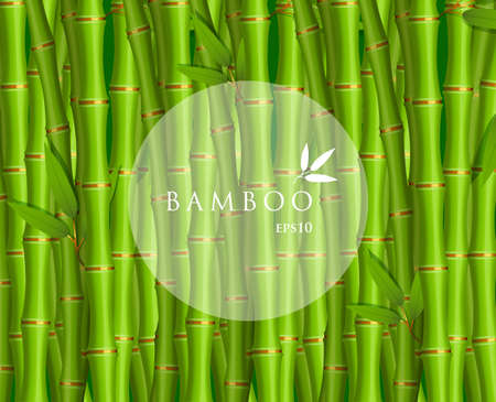 green bamboo: Vector illustration of Background with green bamboo Illustration