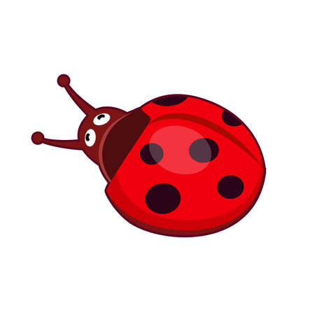 Vector illustration of cute red ladybird on white background 向量圖像