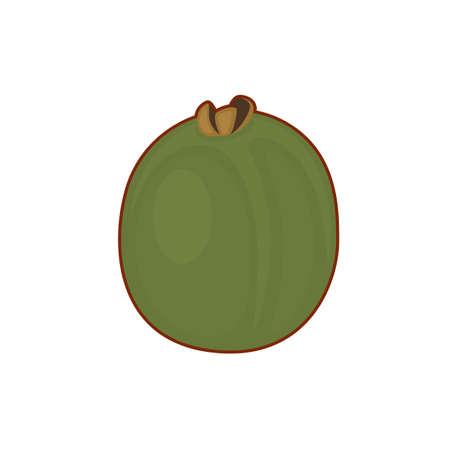 Vector illustration of cute cartoon kiwi fruit on white background 向量圖像