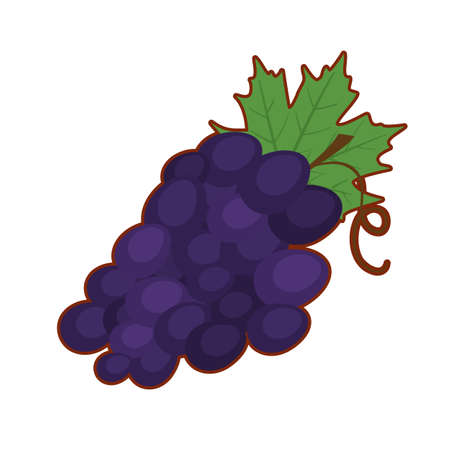 Vector illustration of cute cartoon purple grapes on white background 向量圖像