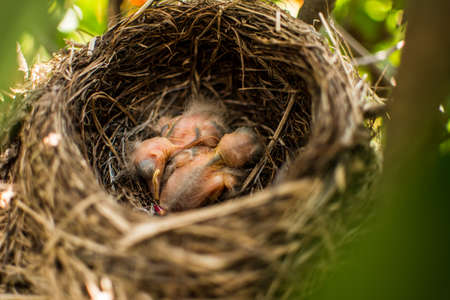 These cute birds are sleeping in their nest while their parents are away.