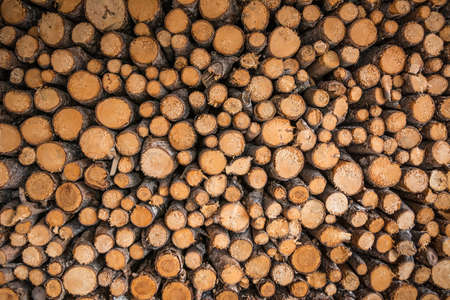 Getting energy by burning wood has been classed as a renewable energy source