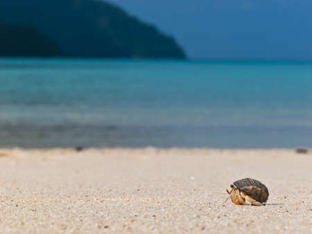 hermit crab: Hermit crab walking on the beach with blue sea blue sky and island background for copy space
