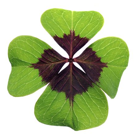 Colorful four-leaved clover isolated against a white background photo