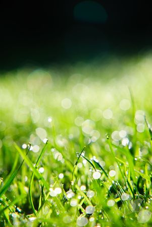 A close up of morning dew on fresh green grass against a dark background.