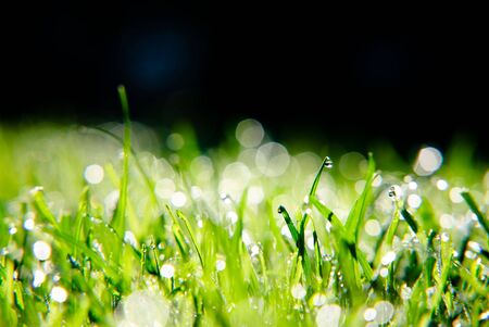 A close up of morning dew on fresh green grass against a dark background. photo