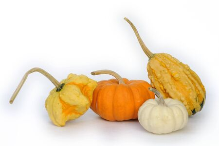 Close up of pumpkins, unusual variety. Isolated on white.