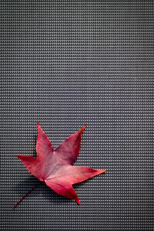 A red autumn leaf against a background of dark woven fabric