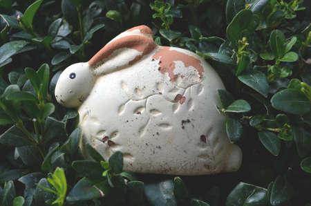 boxwood: bunny in a boxwood tree Stock Photo