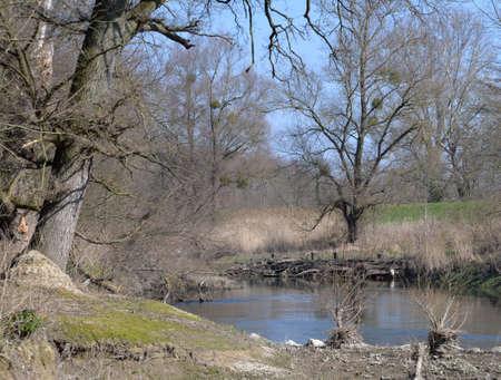karlsruhe: Old Rhine near Karlsruhe