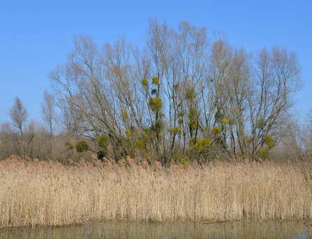 karlsruhe: Nature Reserve near Karlsruhe