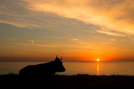 Hintergrundbeleuchtung einer Kuh im Morgengrauen am Meer