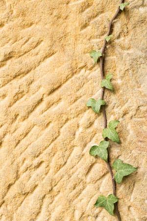 texture of sandstone with creeper Stock fotó