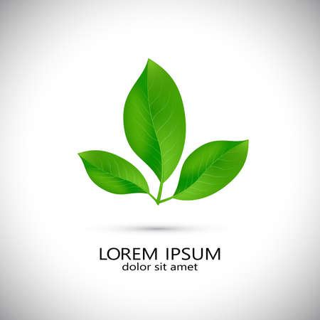 Business icon with green fresh leaves , design template. Vector