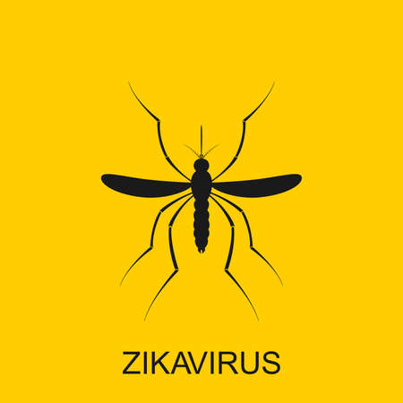 Zika mosquito . Zika virus alert. Zika virus concept. Zika virus mosquito bite. Mosquito . Aedes Aegypti isolated on white background. Illustration