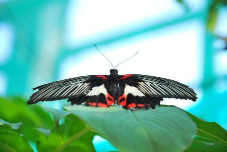 hexapod: butterfly
