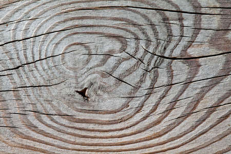 table surface: Wood pattern. Wooden texture with knots. Macro view. aged table surface.