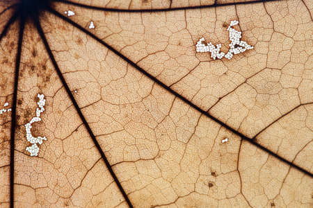 amplified: Macro leaf. Fall, autumn concept. Yellow maple leaf. Detailed, textured. Soft focus. copy space