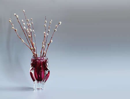 cutglass: Pussy-willow tree branch in red vase. Twigs of willow, symbol Palm Sunday holiday. gray background.