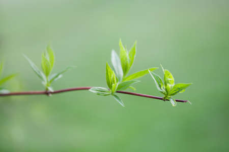 on looker: Twig with green leaves. spring park scene. growth concept image. soft background. macro view