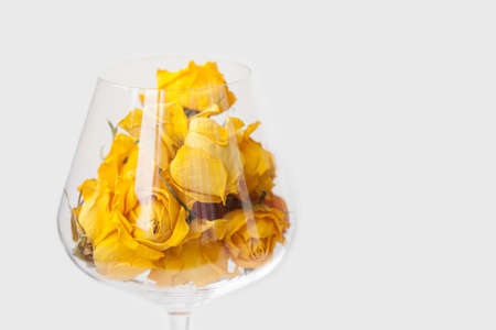 Dried rose flowers in wine glass, white background. yellow petals macro view, copy space, shallow depth of field Stock Photo