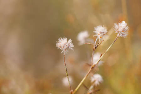 autumn motif: Composition of dried prairie plants. Soft focus. Shallow depth of field close-up Stock Photo