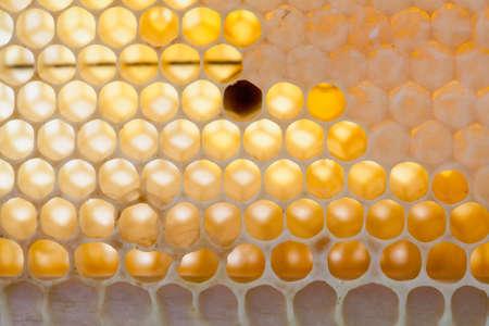 Macro view natural, organic honeycomb cells with natural raw honey. soft focus