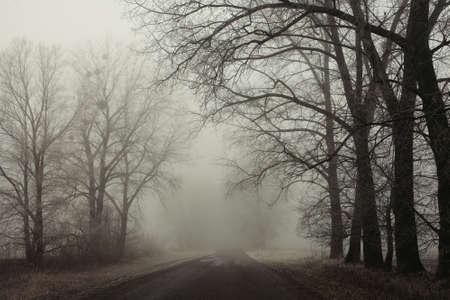 Strada nebbiosa e gli alberi. foresta Misterioso fondo. paesaggio prime ore del mattino, brina sulla terra. Effetto pellicola rumore. foto orizzontale