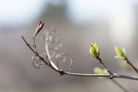 Fresh young greenery leaves. Spring time and new life concept. Soft focus, macro view shallow depth field