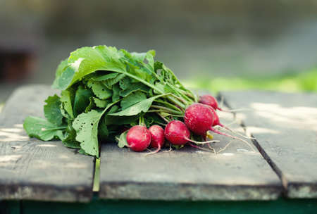 Ripe radish on wooden table background. Farmers food still life. Shallow depth field, selective focus.