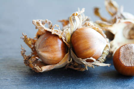 Ripe hazelnut filbert nut Corylus Maxima. Organic cobnuts with dried leaves on stony background. Macro view, selective focus Imagens