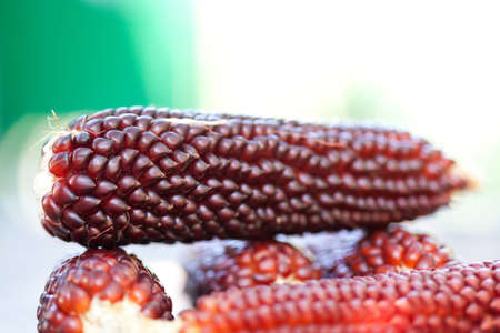 Selective focuse corn cobs, brown red color Maize seeds macro view. Shallow depth field close-up photo. Soft blurred green background